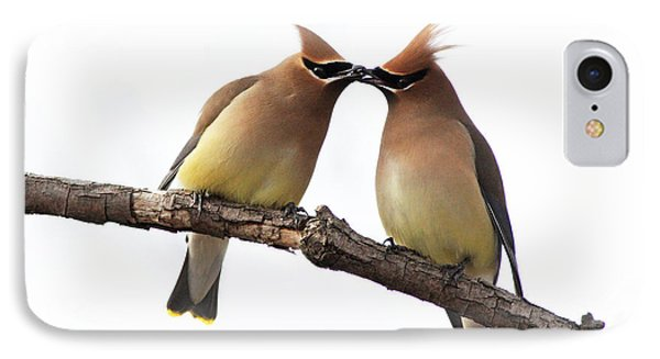 Waxwings In Love IPhone Case by Mircea Costina Photography