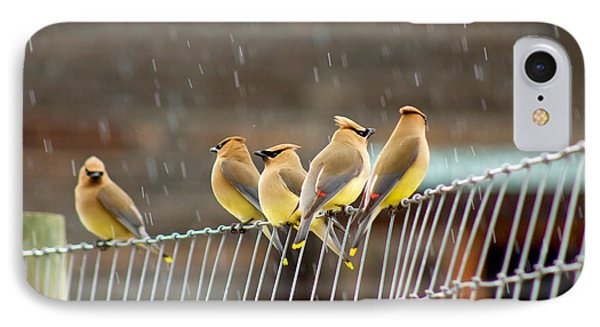 Waxwings In The Rain IPhone Case by Sean Griffin