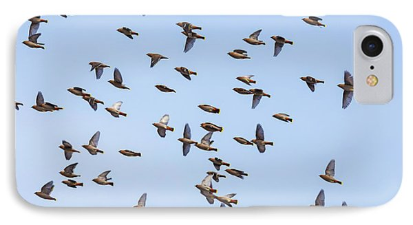 IPhone Case featuring the photograph Waxwings by Mircea Costina Photography