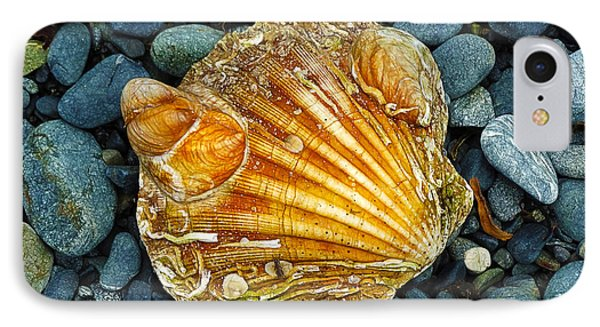 Weathered Scallop Shell IPhone Case by Judi Bagwell