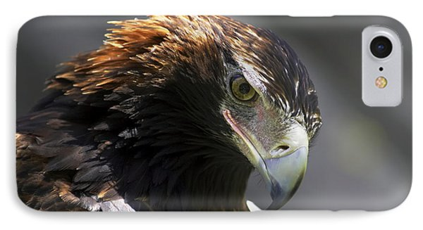 IPhone Case featuring the photograph Wedge Tail Eagle by Bill  Robinson