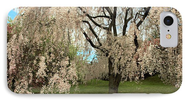 Weeping Asian Cherry IPhone Case by Jessica Jenney