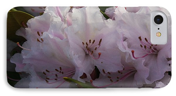Weigela Blossom IPhone Case