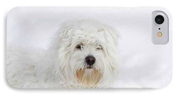 West Highland Terrier Sitting On Snow IPhone Case