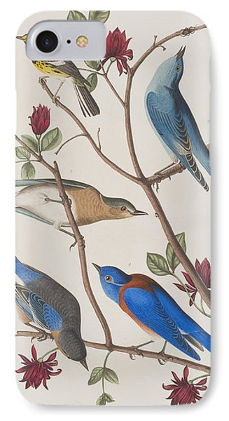 Western Blue-bird IPhone Case