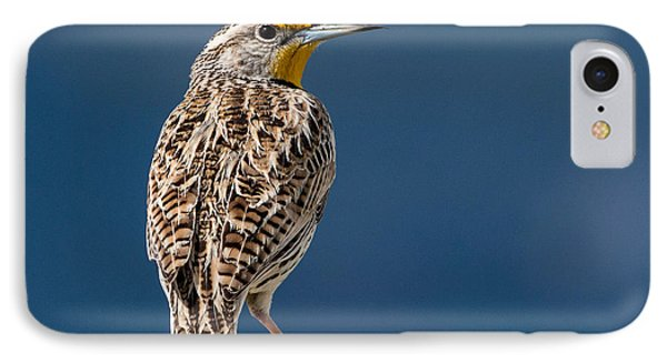 Meadowlark iPhone 7 Case - Western Meadowlark by Dawn Key