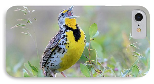 Western Meadowlark IPhone Case by Jack Bell