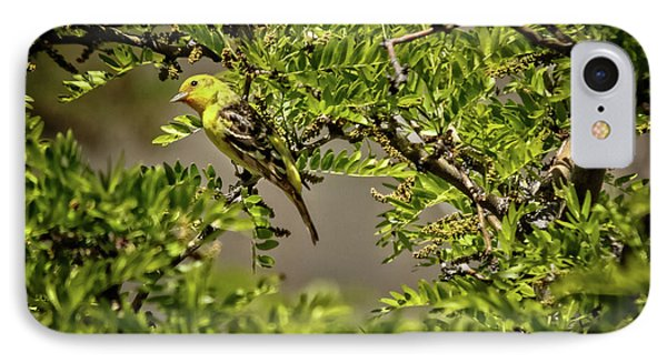 Western Tanager IPhone Case by Robert Bales