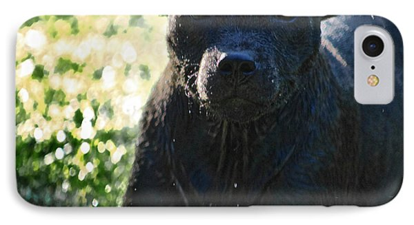 Wet Pup Staffordshire Bullterrier IPhone Case by Shaun Poole
