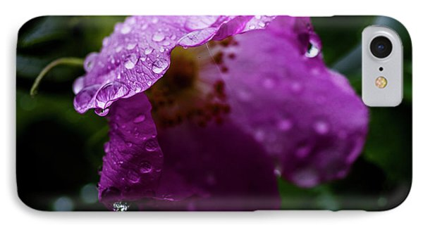 IPhone Case featuring the photograph Wet Wild Rose by Darcy Michaelchuk