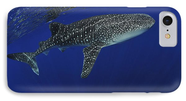 Whale Shark Near Surface With Sun Rays Phone Case by Mathieu Meur