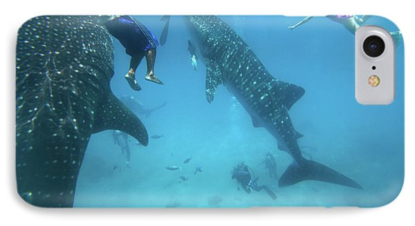 Whale Sharks IPhone Case by Tim Fitzharris