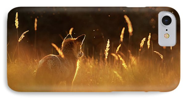 What Does The Fox Think - Red Fox At Sunset IPhone Case