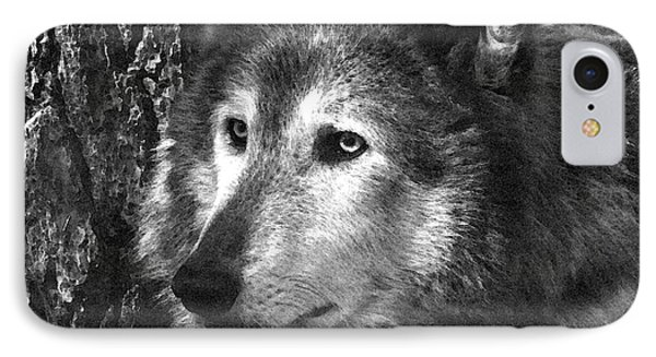 What Is A Wolf Thinking Phone Case by Karol Livote