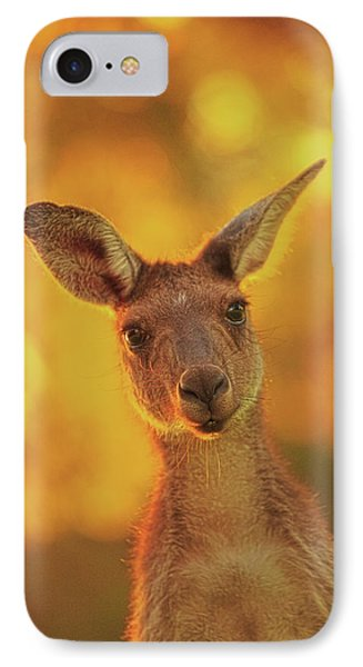 What's Up, Yanchep National Park IPhone Case by Dave Catley