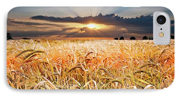 Wheat At Sunset Phone Case by Meirion Matthias