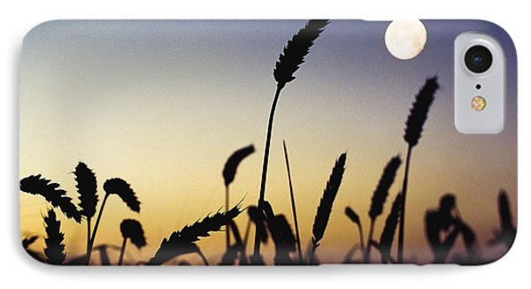 Wheat Field, Ireland Wheat Field And IPhone Case