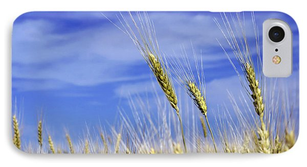 Wheat Trio IPhone Case by Keith Armstrong