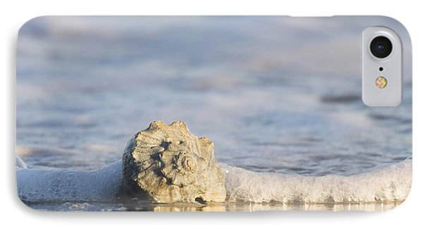 Whelk In Surf Two IPhone Case by Bob Decker