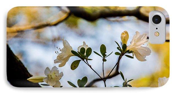 Whie Azaleas Under A Dogwood Tree IPhone Case by John Harding