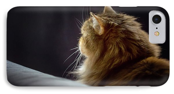 Whiskers In The Morning Light IPhone Case