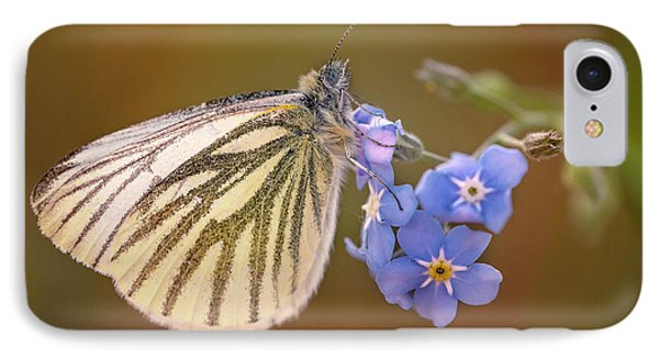 IPhone Case featuring the photograph White And Creamy Butterfly On Forget Me Not Flower by Jaroslaw Blaminsky