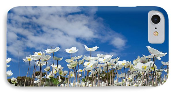 White Anemones At Blue Sky IPhone Case