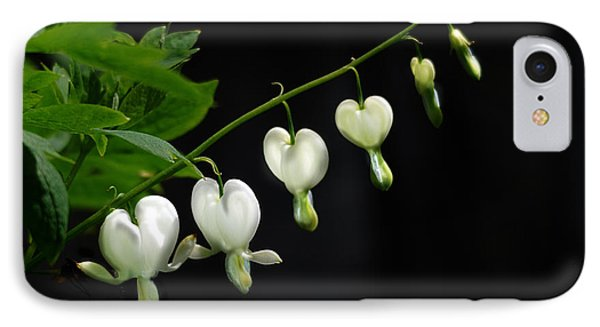 IPhone Case featuring the photograph White Bleeding Hearts by Susan Capuano