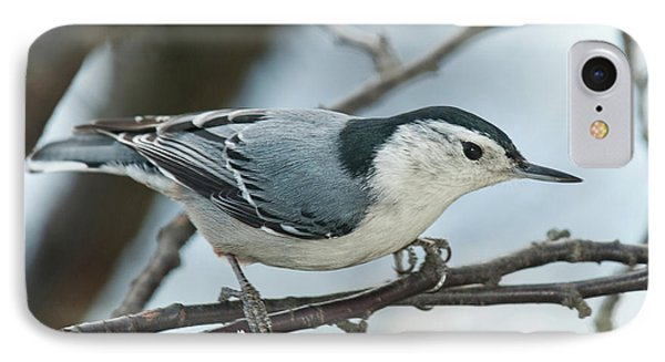 IPhone Case featuring the photograph White Breasted Nuthatch 2017 2 by Lara Ellis