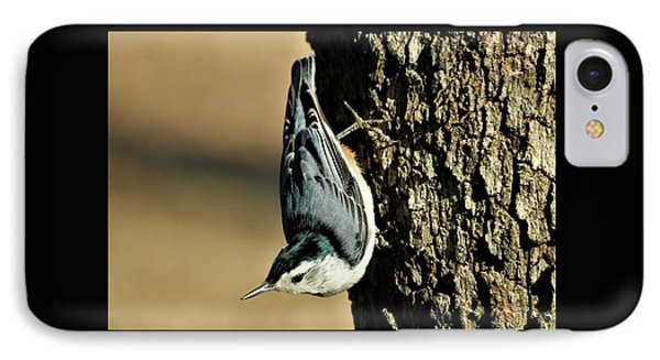 White-breasted Nuthatch On Tree IPhone Case by Sheila Brown
