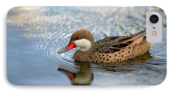 White-cheeked Pintail IPhone Case by Eunice Gibb
