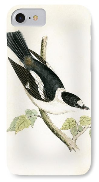 Flycatcher iPhone 7 Case - White Collared Flycatcher by English School
