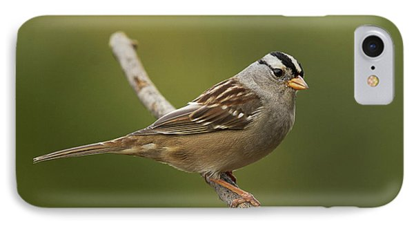 White-crowned Sparrow Phone Case by Doug Herr
