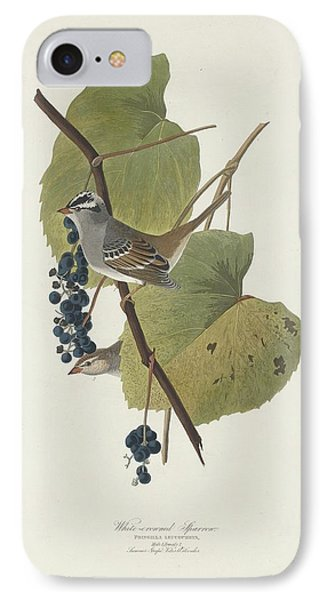 White-crowned Sparrow IPhone 7 Case by Anton Oreshkin