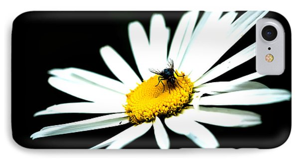 IPhone Case featuring the photograph White Daisy Flower And A Fly by Alexander Senin