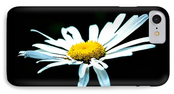 IPhone Case featuring the photograph White Daisy Flower Black Background by Alexander Senin