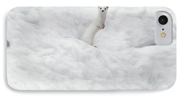 White Ermine  2 IPhone Case by Leland D Howard