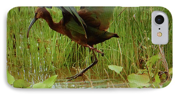 White Faced Ibis 2 IPhone Case by Ruth Housley