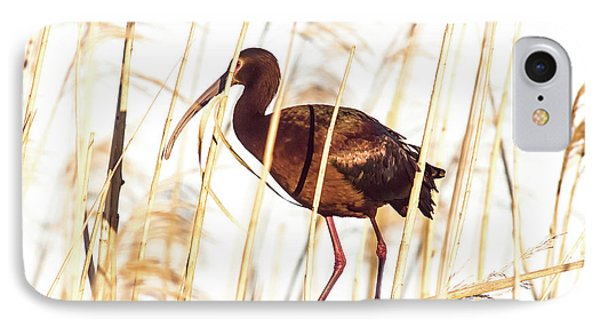 White Faced Ibis In Reeds IPhone Case by Robert Frederick