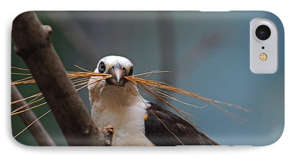 White-headed Buffalo Weaver IPhone Case by Michiale Schneider