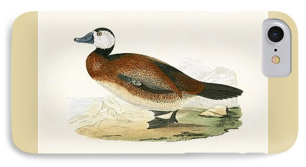 White Headed Duck IPhone Case