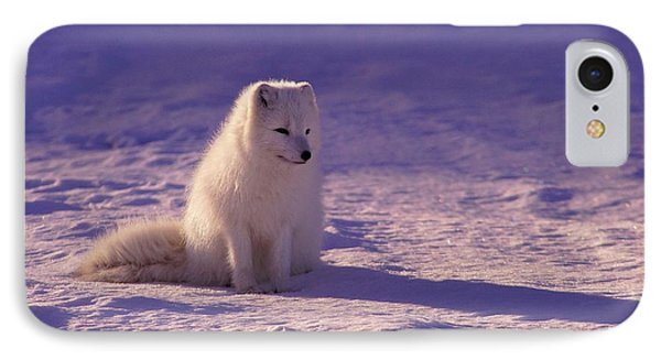 White Husky Pup IPhone Case by Jonathan Pieper