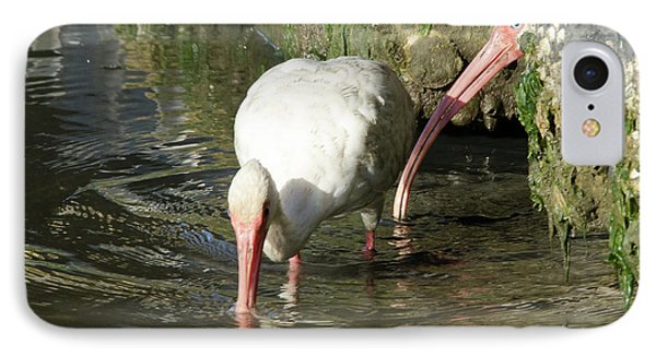 IPhone Case featuring the photograph White Ibis Couple by George Randy Bass