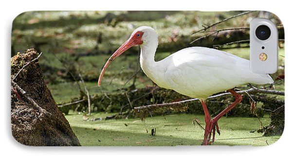 IPhone Case featuring the photograph White Ibis by Gary Wightman
