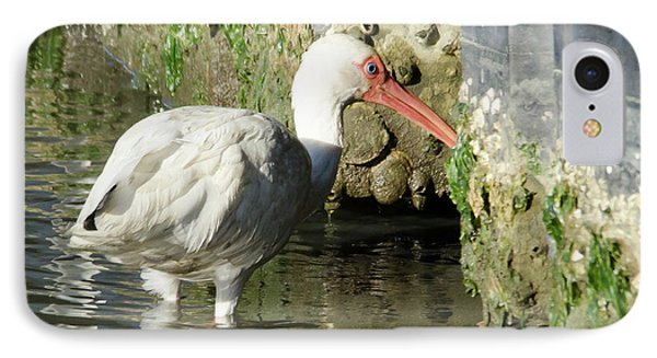 White Ibis Headed Home IPhone Case by George Randy Bass