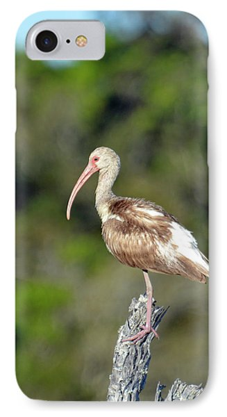 White Ibis In Jekyll Island Marsh IPhone Case by Bruce Gourley