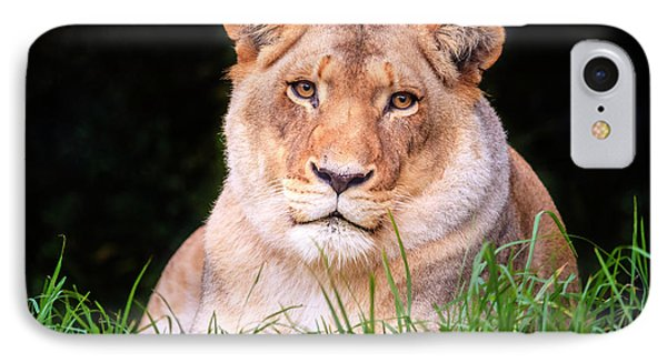 IPhone Case featuring the photograph White Lion by Alexey Stiop
