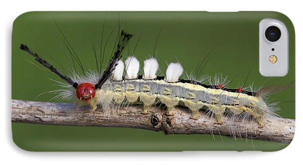 White-marked Tussock Moth 2 IPhone Case by David Lester