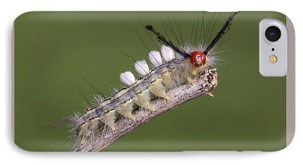 White-marked Tussock Moth IPhone Case by David Lester