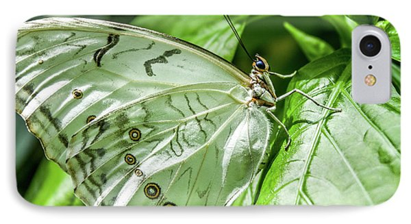 IPhone Case featuring the photograph White Morpho Butterfly by Joann Copeland-Paul